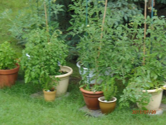 Academy Bed & Breakfast: Tomato Garden