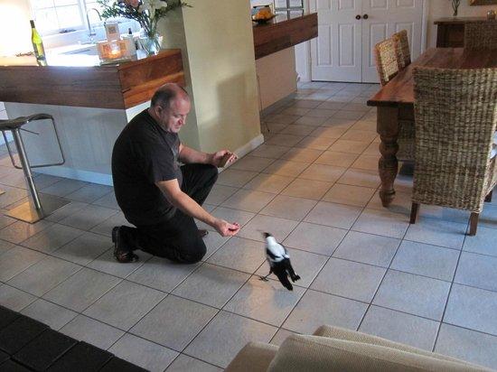Llewellin's Guest House: James & his 'pet' magpie
