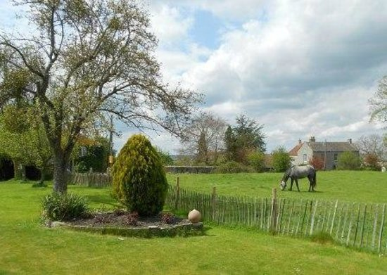 Orchardleigh B & B: View from Dabinett