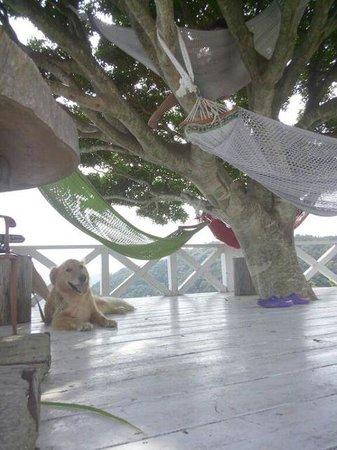 Hotel Bellevedere : ハンモッグと犬