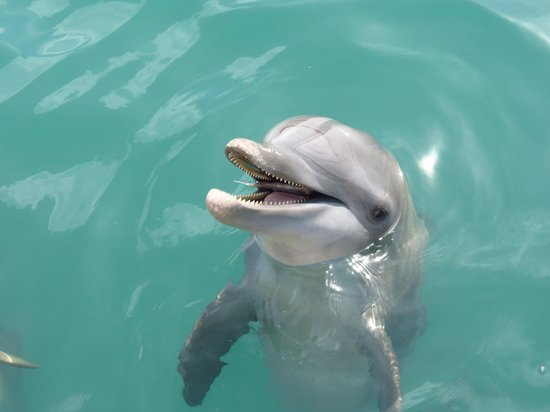 Dolphin Cove: Gorgeous dolphins
