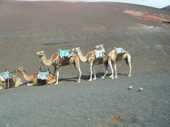 Customer Travel: camels