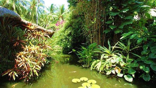 Watergarden Cafe: romantic nature around