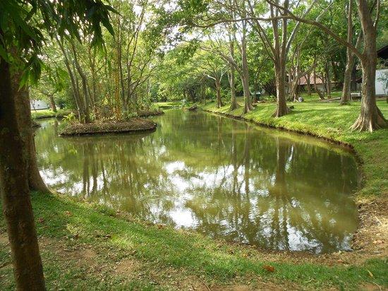 Cinnamon Lodge Habarana : laghetto