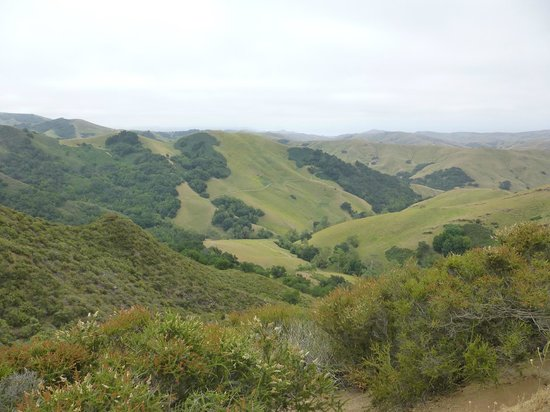 Moonstone Landing: Paso Robles just 15 minutes from the hotel.