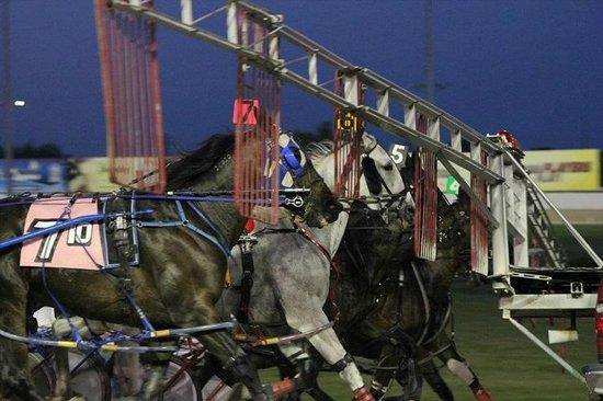 Eldorado Gaming Scioto Downs: Harness Racing - starting gate