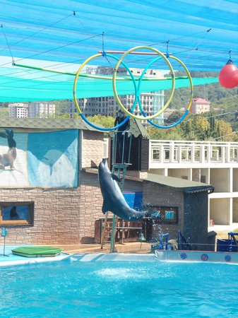 The Dolphinarium (Aquatheatre)