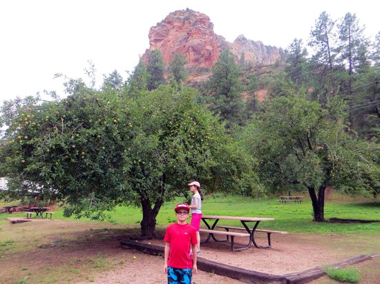 Slide Rock State Park: Apple trees still remain at the entrance of the park.