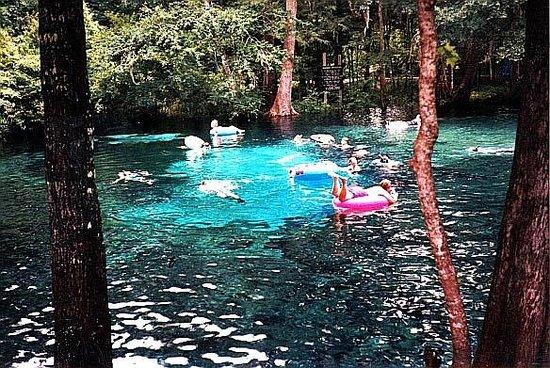 Ginnie Springs: lindo este lugar!