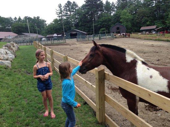 Ridin-Hy Ranch Resort: Kids feeding horses