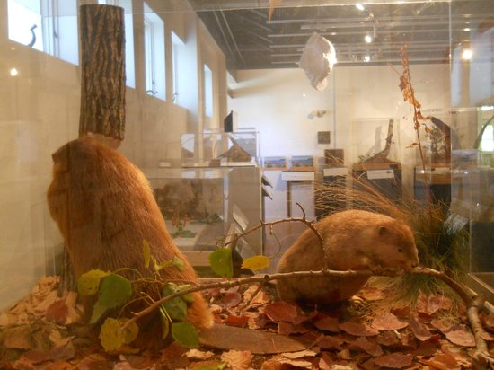 George B. Dorr Museum of Natural History: Many taxidermy exhibits on display!