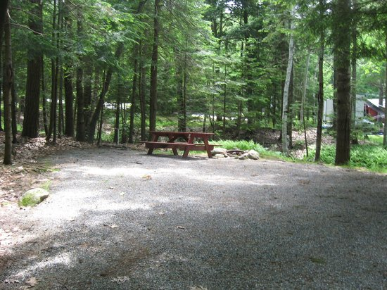 Shore Hills Campground : A typical tent site