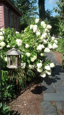 The Williamsburg Manor Bed and Breakfast: Beautiful hydrangeas in bloom