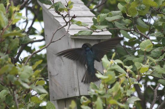 Forteau, Canada: Bird Watching labrador Straits