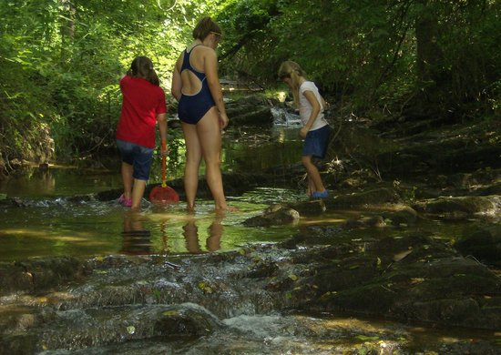 Wildwood Park: Fun in the creek