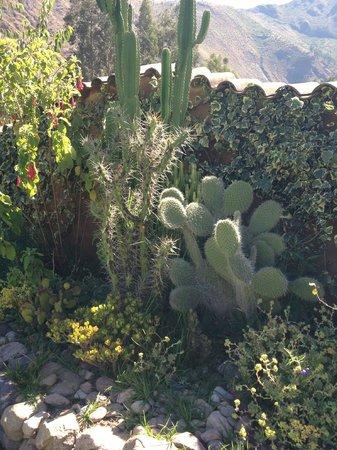 The Green House Peru: Beauty everywhere!