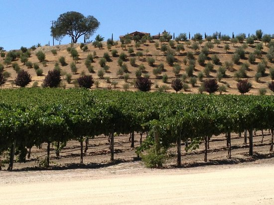 Grapeline Wine Tours, Paso Robles : Vinyards