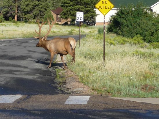 Rocky Mountain Park Inn: Breakfast Guest