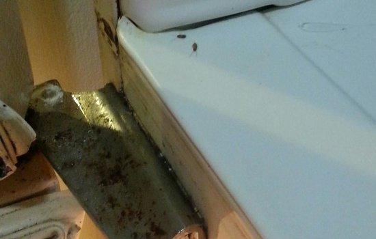 Econo Lodge: roaches