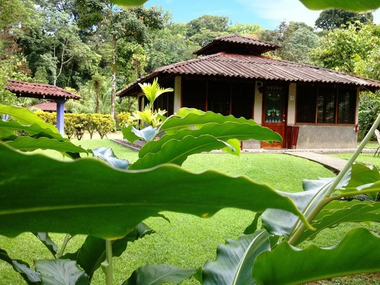 Casa Corcovado Jungle Lodge : Deluxe Bungalow