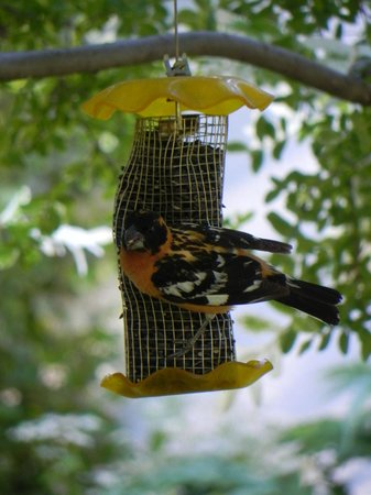 Lithia Springs Resort: Bird