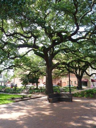 Reynolds Square: Wonderful tree