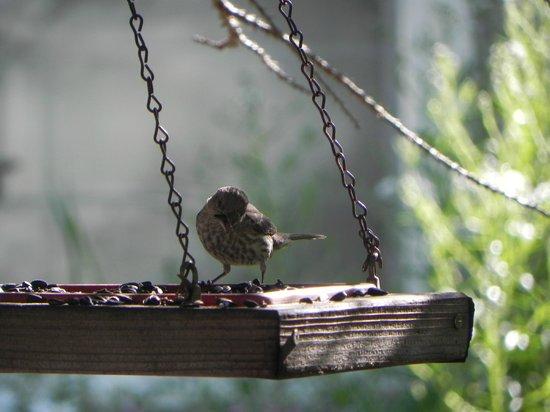 Lithia Springs Resort : Hungry bird
