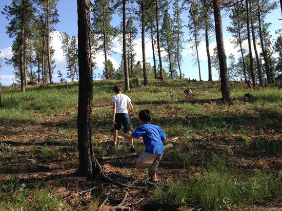 Calamity Peak Lodge: Hiking hill behind unit 8