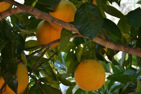 Reverie Winery: Orange Tree