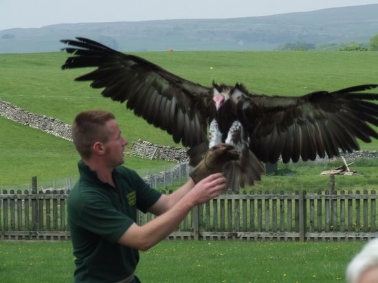 Yorkshire Dales Falconry and Conservation Centre: wingspan