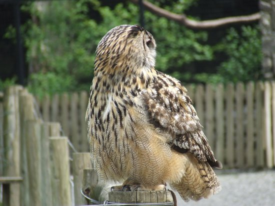 Yorkshire Dales Falconry and Conservation Centre: Eagle Owl