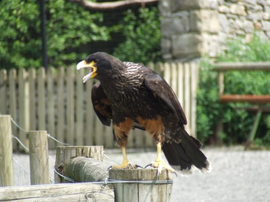 Yorkshire Dales Falconry and Conservation Centre: cheeky