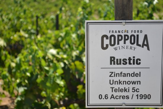 Francis Ford Coppola Winery: Rustic