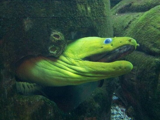 The Seagate Hotel & Spa: Moray Eel in Seagate Fish Tank
