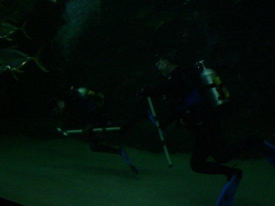 North Carolina Aquarium at Pine Knoll Shores: Pine Knolls