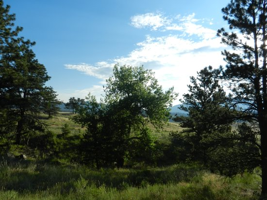 Bobcat Ridge Natural Area: Trees and mountains
