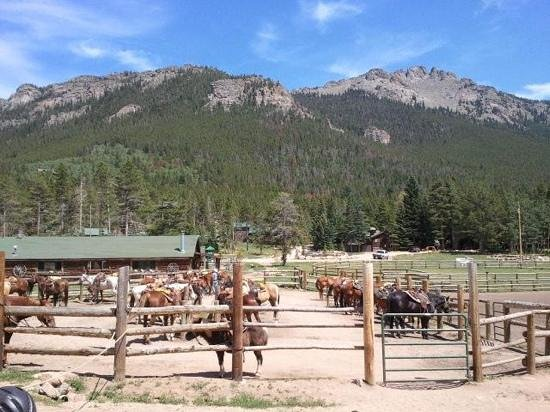 Wind River Christian Family Dude Ranch: Best cared for and trained horses in the valley.