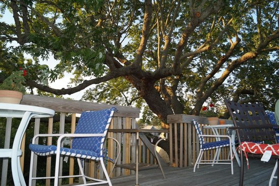 Charm : The lovely tree top terrace