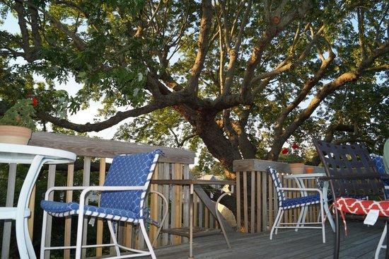 The Elephant Walk Inn: The lovely tree top terrace