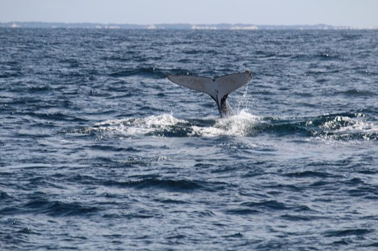 Seaworld Cruise Day Tours: Taillash of Humpback  whale
