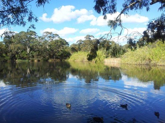 Wittunga Botanic Garden