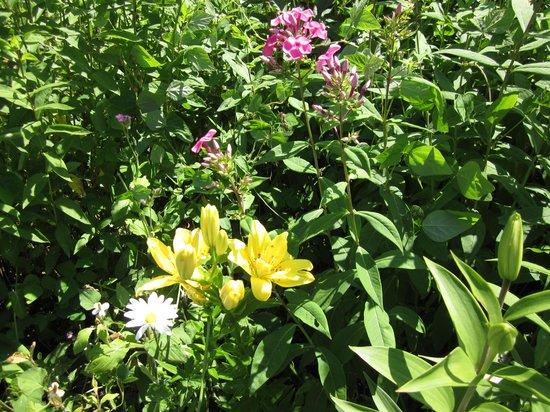 Ueno Farm: nice flowers