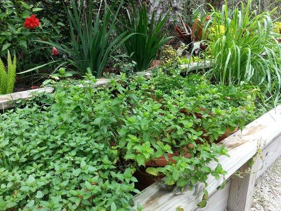 LuLu's at The Thompson House : LuLu's Fresh Herb Garden