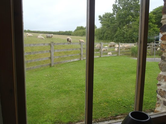Rooke Cottages: View from double room