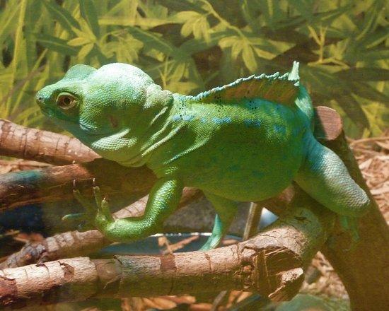 Alligator Adventure Inhabitant Of Reptile House
