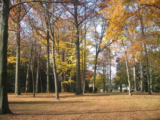 Rutherford B. Hayes Presidential Library & Museums: Spiegel Grove....lots of great places to walk!