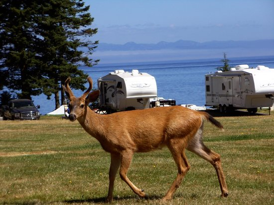 Salt Creek Recreation Area : Deer at the park. - 7-22-2013