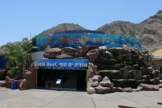 Underwater Observatory Marine Park : Аквариум с акулами - у него 3 уровня