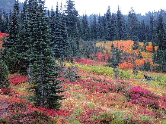 Paradise Loop Mount Rainier National Park WA Top Tips Before - Map of the us but circle of paradise washington
