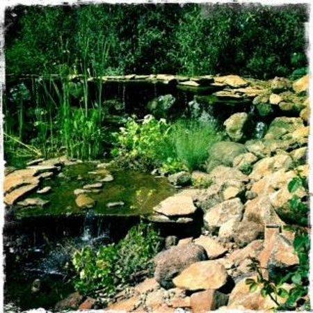 Anselmo Vineyards : Beautiful pond